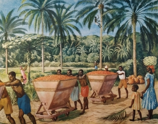 Macmillan's History Pictures: TRANSPORTING OIL-PALM IN WEST AFRICA