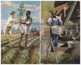 Macmillan's History Pictures: HARVESTING GROUNDNUTS IN EAST AFRICA