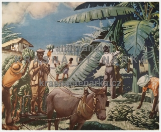 Macmillan's History Pictures: A BANANA PLANTATION IN JAMAICA