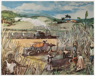 Macmillan's History Pictures: HARVESTING SUGAR-CANE IN THE WEST INDIES