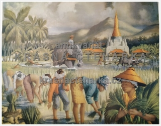 Macmillan's History Pictures: SETTING OUT RICE-PLANTS IN BURMA